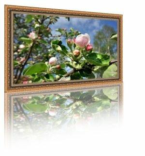 Фото редактор. Создание рамки с отражением